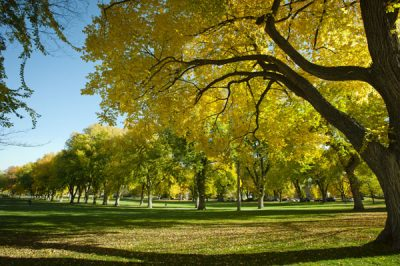 Fall on the Colorado State University campus. This may be the last great oppurtunity to enjoy our great autum colors. October 25, 2011 CSU Photogrtaphy 23017_03834.jpg
